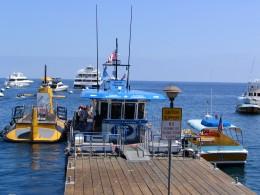 Down LA River Catalina: Yellow Submarine