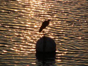 Down LA River Part 11: bird on a float