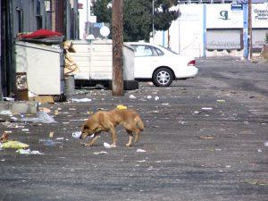 Down LA River Part 4: homeless dog