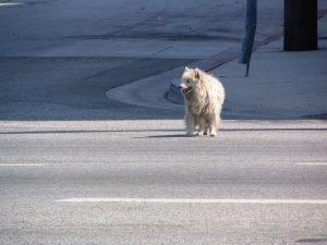 Down LA River Part 4: lost dog