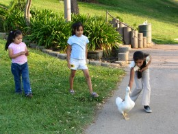 Down LA River Part 7: 3 girls and a duck at Hollenbeck Park