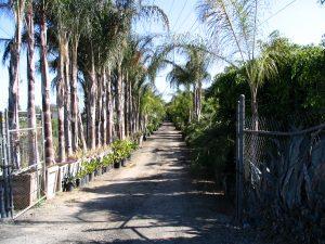 Down LA River Part 8: Gomez Nursery 2