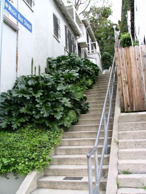 Sunset Boulevard - Part Five: The Music Box Stairs