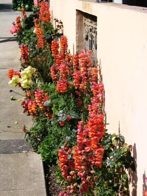 Sunset Boulevard - Part Sixteen: Brentwood, flora 1