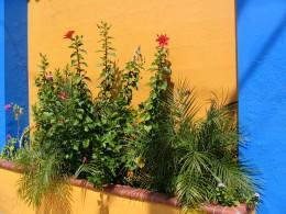 Sunset Boulevard - Part Three: Echo Park, planter