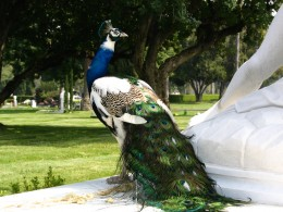 Sunset Boulevard – The Dead: Part 1 - Hollywood-Forever: peacock