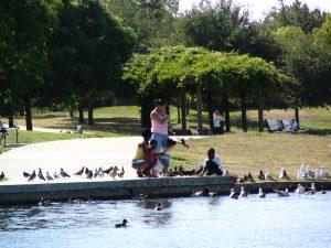 Up LA River Part 12: feeding bird at Balboa Lake