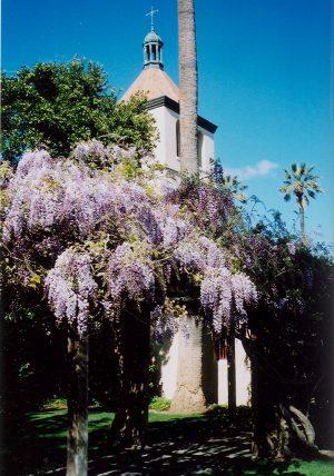 21 Missions: Santa Clara wisteria