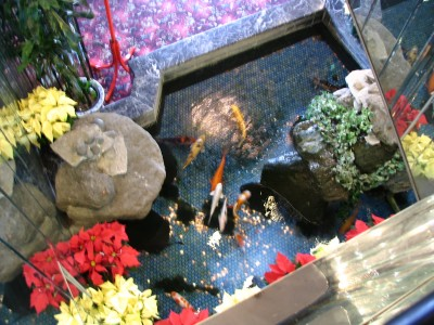 Rt 66: LA: Chinatown koi pond