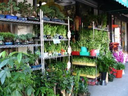 Rt 66: LA: Chinatown plant store