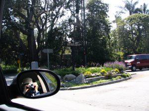 Sunset Boulevard - Part Fifteen: UCLA, Lee photoing Bel Air