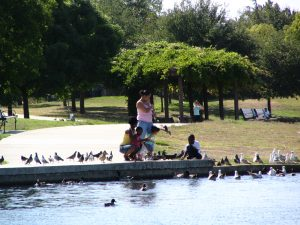 Up LA River Part 12: feeding bird at Balboa Lake