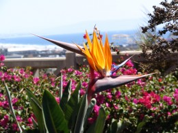 Wilshire Blvd Part 6: bird of paradise