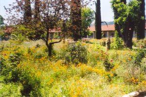 21 Missions: San Antonio gardens