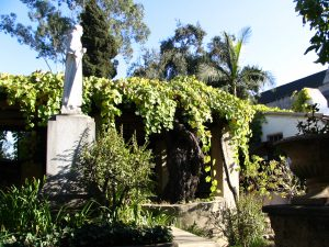 San Gabriel massive grape vines