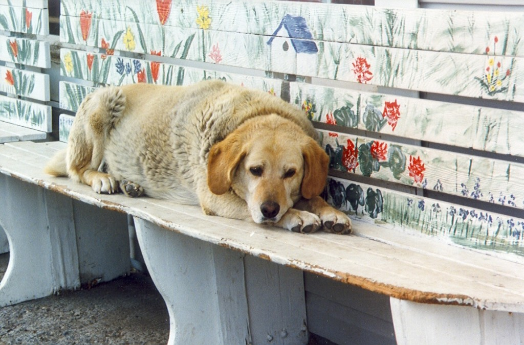 Fat Dog on a bench