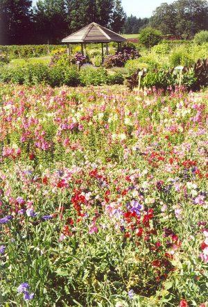 Kruger's u-pick flowers