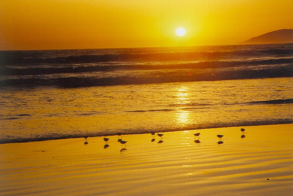 Oceano Dunes sunset